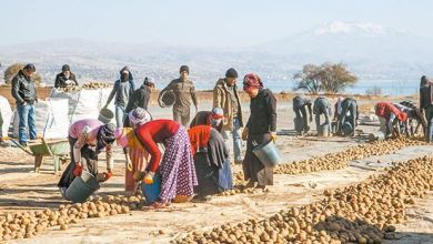 Photo of EMEK | Patatese Gelen İhracat Yasağı Tüccarın Ekmeğine Yağ Sürmektir!