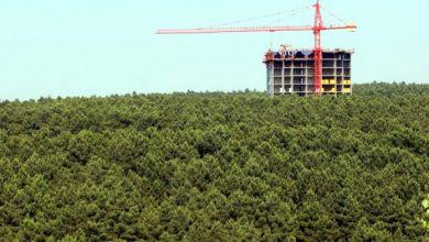 Photo of Ormanlar yıkıma açıldı, 'sınır' yetkisi Erdoğan'a verildi
