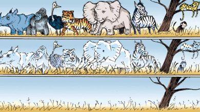 Photo of 2020'de 36 hayvan ve bitki türü yok oldu
